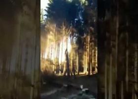 Валка леса - эффект домино